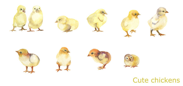 Cute yellow chickens.Funny farm.10 chickens on white background.