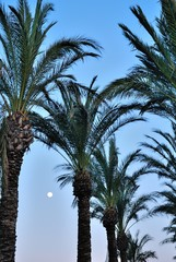 Full Moon seen through the palm trees in Turkey
