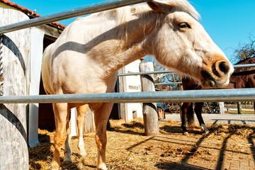 pferd auf der ranch