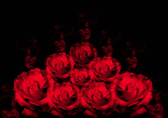 Rosas rojas, fondo negro, perfume, olor.