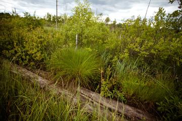 Fototapeta Karelian swamp