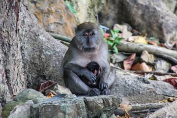 Monkey and Chimp in Koh Phi Phi