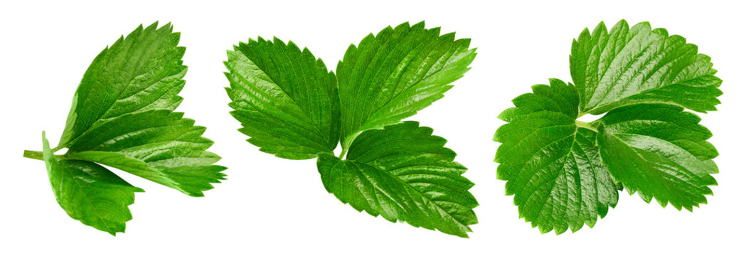 Strawberry leaves Clipping Path