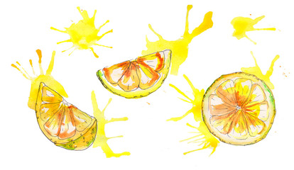 Watercolor handpainted juicy lemon isolated on white background.