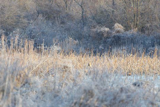 Orange Reeds Around Marsh