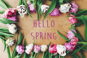 Hello spring text sign on beautiful double peony tulips frame flat lay on wooden table. Springtime. Stylish floral greeting card. Hello march Wall mural