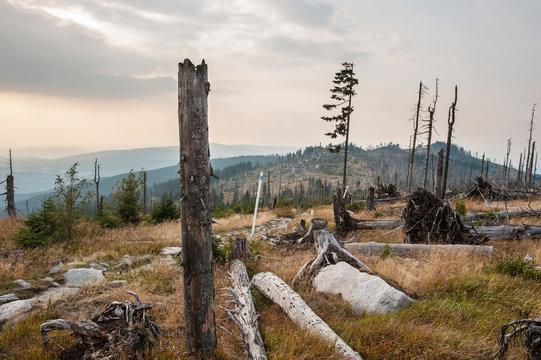 Tote Bäume im Nationalpark Bayerischer Wald, Deutschland