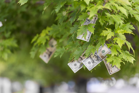 Money growing on tree, USA currency dollar, cash crop, money tree, finance concept stock, investment, passive income, inheritance, loans, saving, money doesn't grow on trees