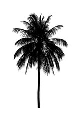 coconut tree silhouettes beautiful on white background