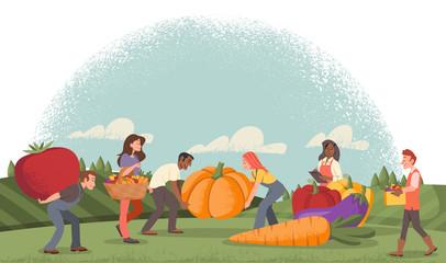 People harvesting organic food in the farm. Fresh healthy vegetables.