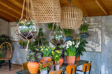 Dekoration: Mehrere Frühlings Gewächse in Tontöpfen auf einem Tisch
