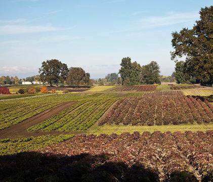 Crops in a Farm Field