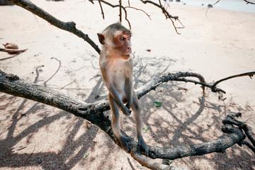 Portrait of a monkey close-up.