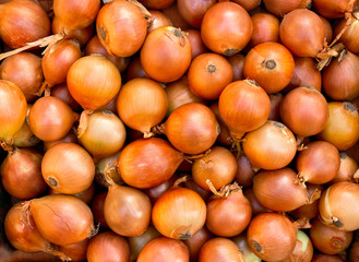 Fresh raw bulbs onion ( Allium cepa ). Texture, background Wall mural