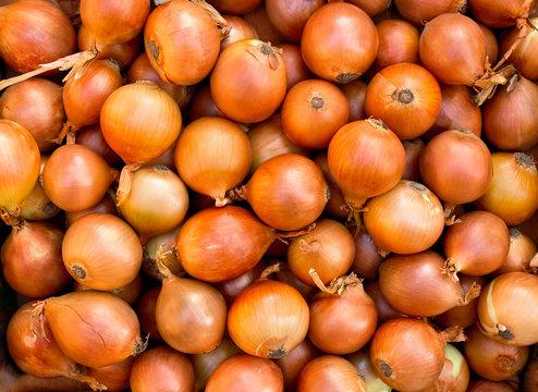Fresh raw bulbs onion ( Allium cepa ). Texture, background