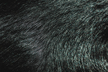 Black fur texture