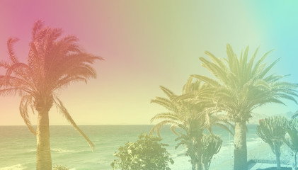 Toned photos of the palm trees, purple yellow pink, blue colors, selective focus