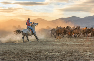the cowboy who runs a herd of wild horses Wall mural