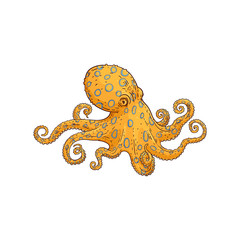 Vector yellow octopus sketch marine animal icon