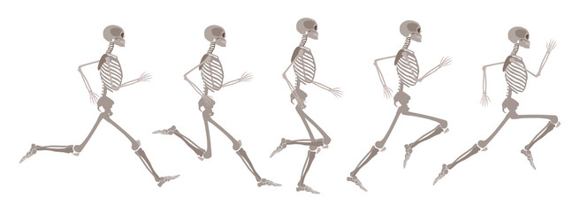 Vector human skeleton in motion and runnning set