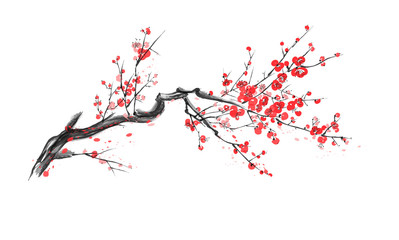 Realistic sakura blossom isolated on white background. Wall mural