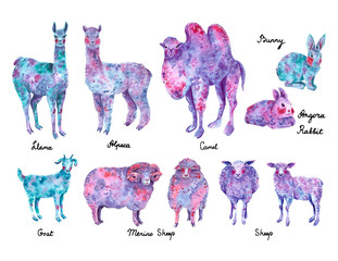 Set of wool animals: llama, alpaca, merino sheep, angora rabbit, camel, goat. Blue, purple and pink colors, hand drawn watercolor illustration.