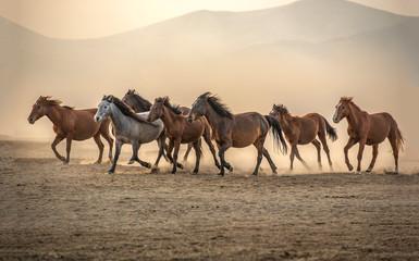 Vahşi atlar, tablo
