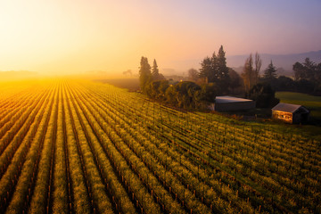 Sonoma Sunrise over Chardonnay and Wild Mustard Wall mural