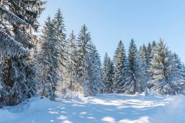Printed kitchen splashbacks Light blue Snow mountain forest trees. Pine snow trees landscape