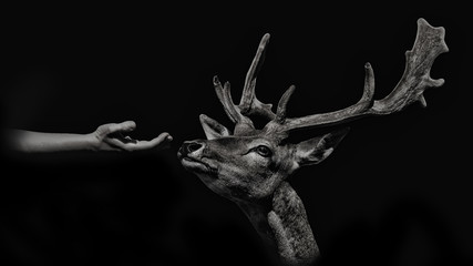 Deer smelling a hand to look for food isolated on black background. monochcromatic photography Wall mural