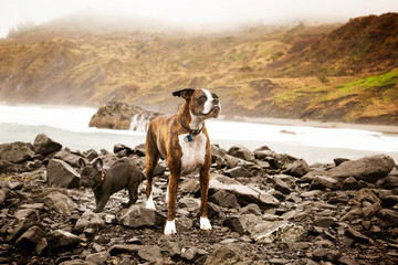 Portrait of dogs standing on riverbank