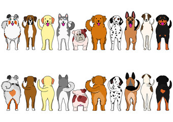 dogs breed border set with color