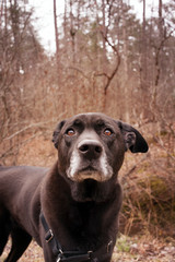 Portrait of black dog in forest