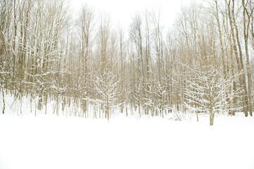 Winter Scene Bellaire, Michigan