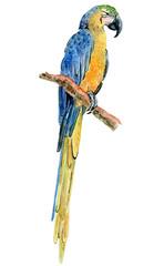 watercolor tropical parrot