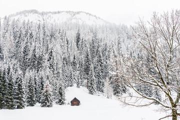 Snow magic. Walk in the ancient village of Sappada. Friuli