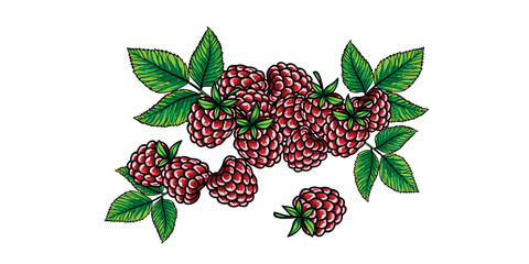 Raspberries with green stem and leaves