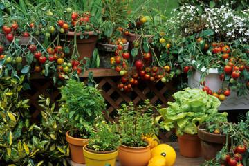 Fototapeta Balcon fleuri avec des légumes et plantes aromatiques obraz