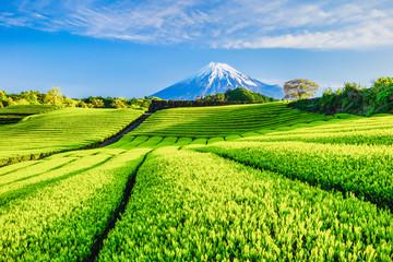 富士山と茶畑 Wall mural