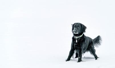 Hund spielt im Schnee und wartet gespannt darauf, dass ihm der Bald geworfen wird