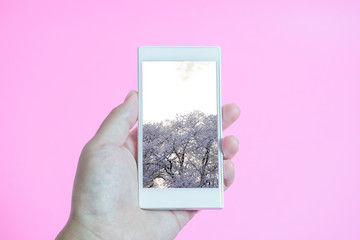 Watch cherry blossoms information on smartphone. Examine Japan information on mobile phone.  桜情報をスマホで見る。日本情報を携帯電話で調べる。