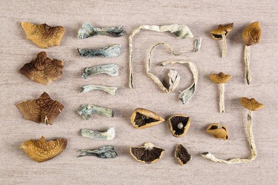 Psychoactive dry magic mushrooms.