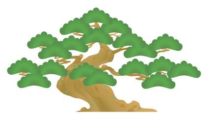 松 老松 盆栽