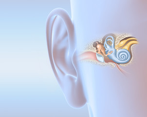 Fototapeta Human ear anatomy, medically 3D illustration