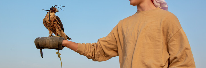 Tourist holding a falcon with a leather hood. Falconry show in the desert near Dubai, United Arab Emirates