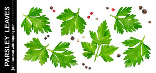 Parsley leaves isolated on white background with clipping path, collection