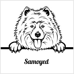 Samoyed - Peeking Dogs - - breed face head isolated on white