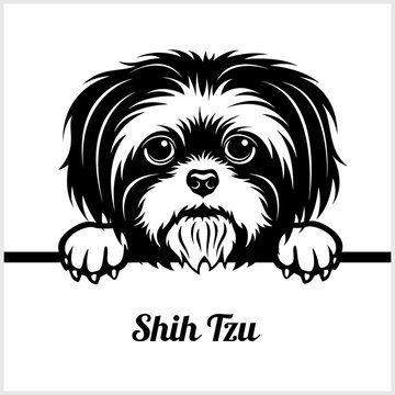 Shih Tzu - Peeking Dogs - - breed face head isolated on white