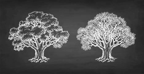 Chalk sketch of two oaks.