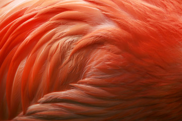 Close up of flamingo feathers